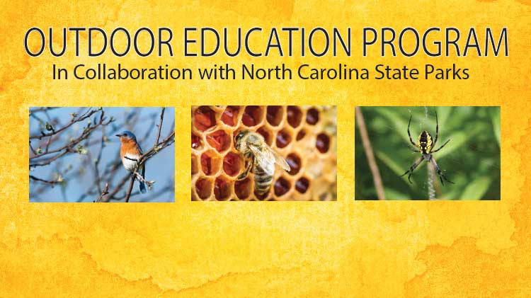 Outdoor Education Program - Busy Bees